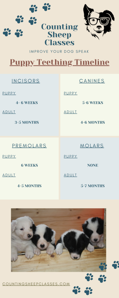 Puppy Teething Timeline